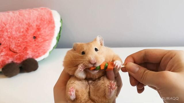 HAMSTER SKEWER CHALLENGE - Hamster Stuffing Cheek Pouches with Veggie Skewers